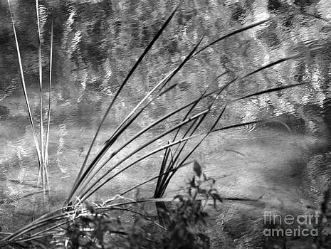 dsc00135 Reeds and Reflections by AnneKarin Glass