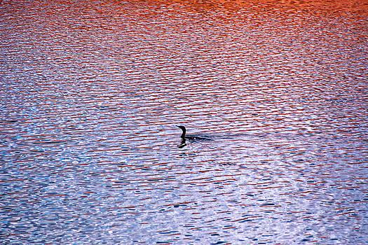 Duck by Benny Kennedy