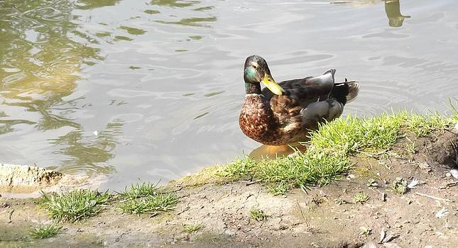 Duck by Furin Erika
