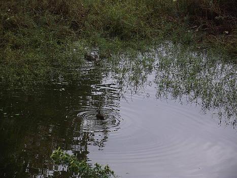 Duck In A Pond by Rani De Leeuw