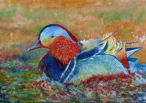 Duck in pond by Rashid Hamza