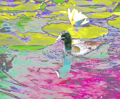 Duck in Waterlily Pond by Nabila Khanam