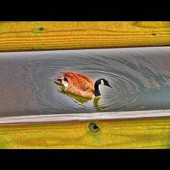 Duck On Canal by Bill Cannon