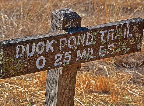 Bill Owen - Duck Pond Trail