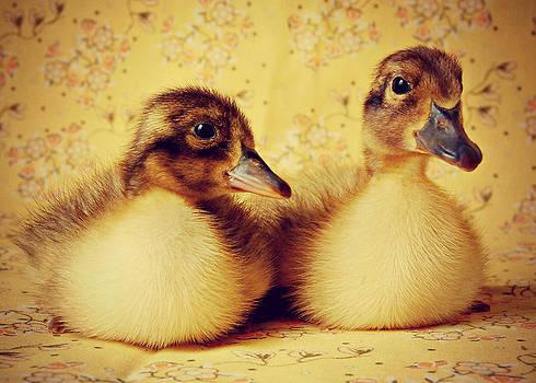 Duckie Duo by Amy Schauland