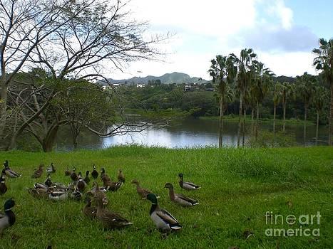 Ducks at Ho'omaluhia by Ruth Kongaika