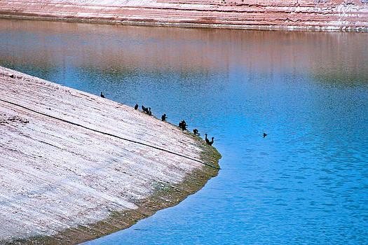 Ducks by Benny Kennedy