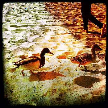 #ducks #malibu #estuary  #picoftheday by Joe Pardo