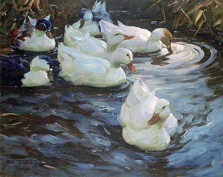 Ducks On A Pond by Photos.com
