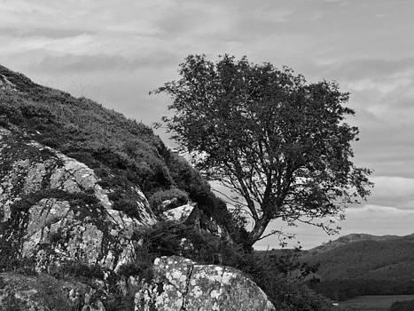 Dunadd Rowan Mono by Steve Watson