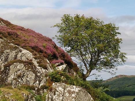 Dunadd Rowan by Steve Watson