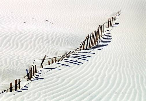Dune Fence by Boyd Miller