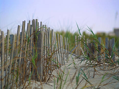 Dune Fence by Jeremy Allen