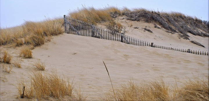 Marysue Ryan - dune