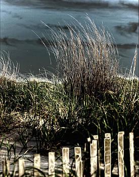 Dunes by Maureen Cunningham