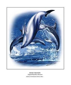 Dusky Dolphin by Owen Bell