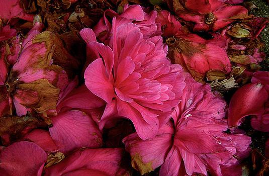 Baato   - dying bloom melange