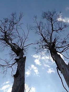 Dying trees by Jesus Nicolas Castanon