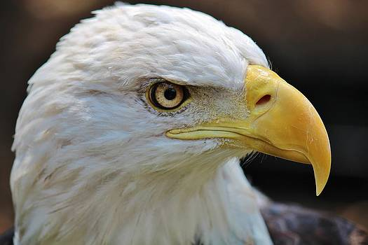 Eagle Eye by Alexander Spahn
