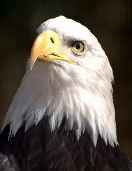 Marty Koch - Eagle Eye