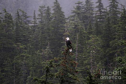Eagle Eye View by Theresa Willingham