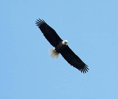 Eagle Flight 1 by Dan Lease