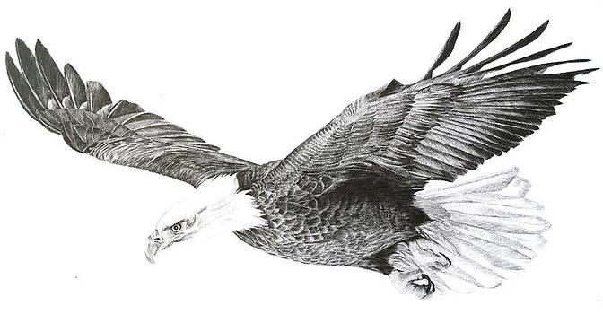 'Eagle in Flight' by Sue  Miles