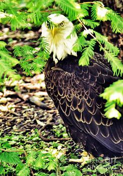 Anne Ferguson - Eagle in the Pines