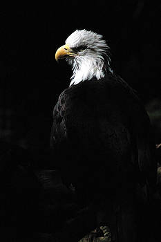 Eagle in the Sun Ray by Wanda Jesfield