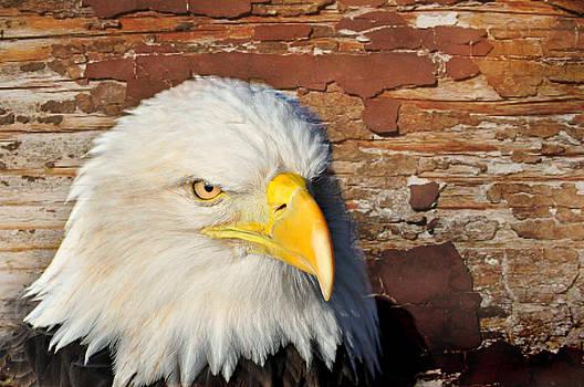 Marty Koch - Eagle on Brick