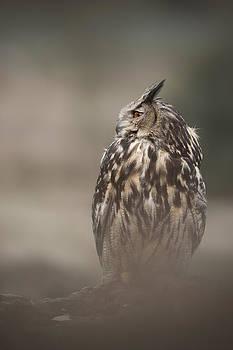 Eagle Owl by Andy Astbury