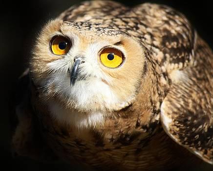 Paulette Thomas - Eagle Owl