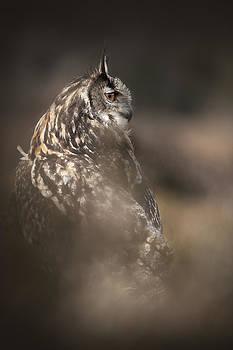Eagle Owl Portrait by Andy Astbury