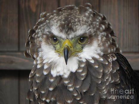 Eagle Owl by Sandy Owens