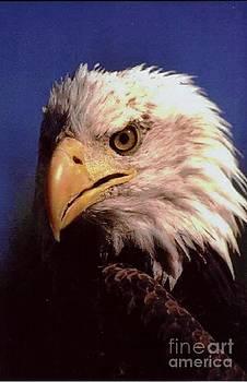 Diane Kurtz - Eagle Portrait