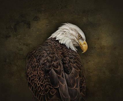Eagle Profile by Pat Abbott