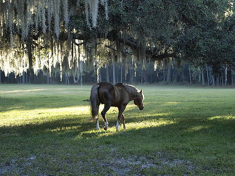 Early Morning Florida by Cindy Carr