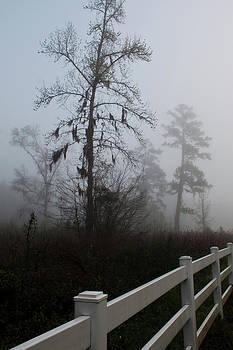 Early Morning Fog by Sandi Blood
