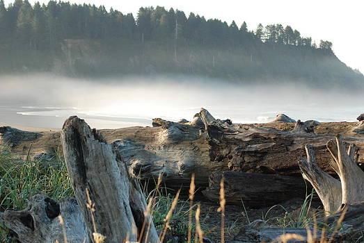 Early Morning Fog by Wanda Jesfield