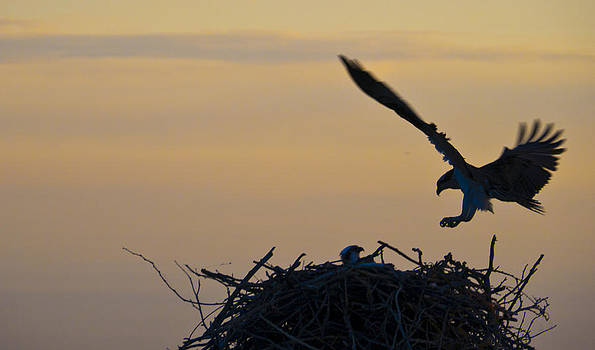 Early Morning Landing by Bob Lennox