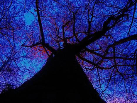 Earth veins by Steve Skinner