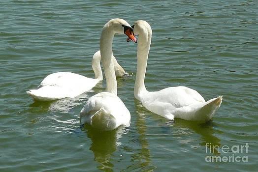 Easter swans by Alisa Tek