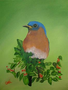 Eastern Bluebird by Charlie Brown