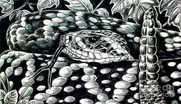 Eastern Daimondback Rattlesnake by Kimberlee  Ketterman Edgar