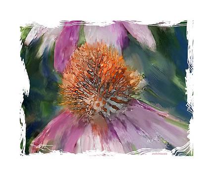 Echinacea by Bob Salo