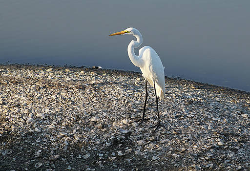 Egret at Huntington by Sandi Blood