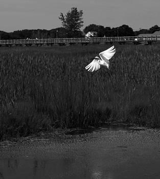 Egret in Flight by Shaileen Landsberg