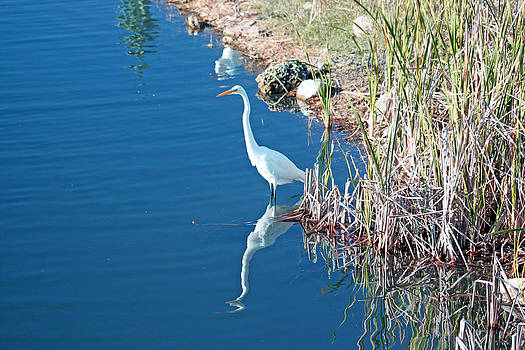 Egret by Janet Pugh