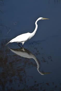 Egret Reflection by Peggie Strachan