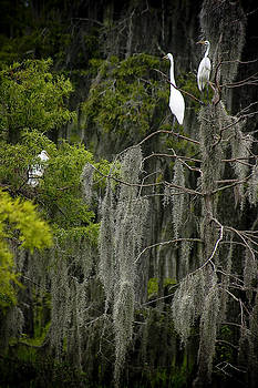 Egrets Nest by Shawn McElroy
